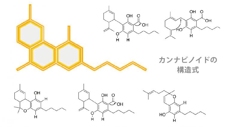 cannabinoids-768x426