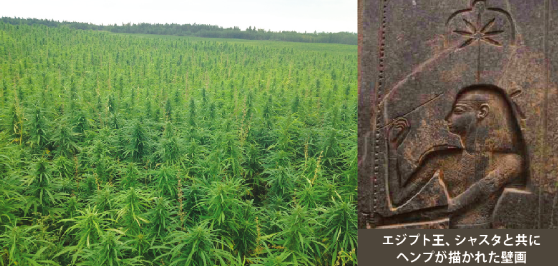 elixinol-hemp-about