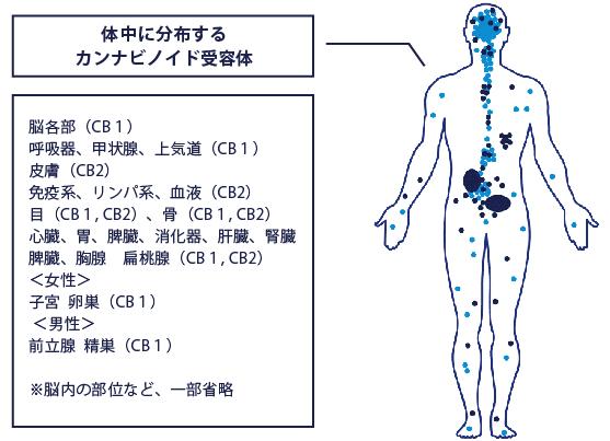 eodocannabinoid-1-557x403